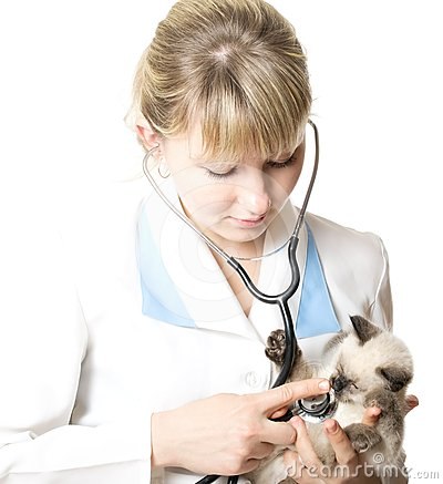 Veterinarian examining   kitten