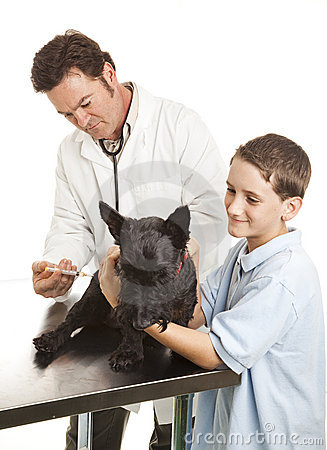 Veterinarian Giving Vaccination