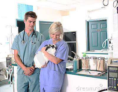 Veterinarian holding a rabbit