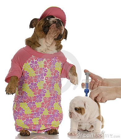 Free Veterinary Care Royalty Free Stock Photos - 12151178