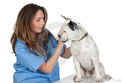 Veterinary with a dog for a review