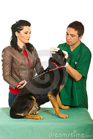 Veterinary examine dog