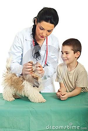 Veterinary examine puppy mouth