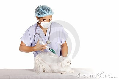 Veterinary healing cat
