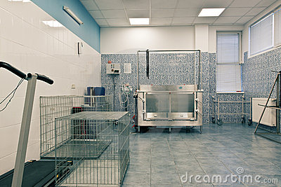 Veterinary orthopedics treatment room