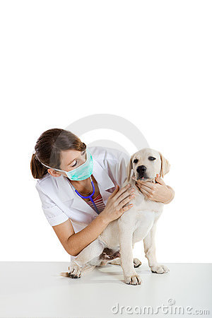 Veterinary taking care of a dog