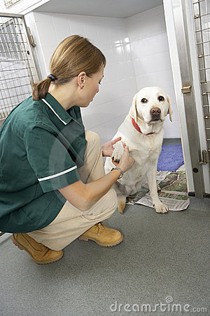 Vetinary Nurse Checking Sick Animals In Pens