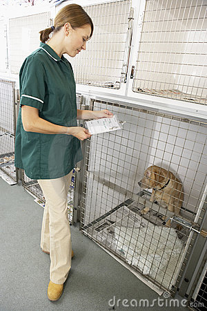 Vetinary Nurse Checking Sick Animal In Pen