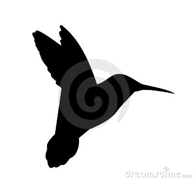 Vetor da silhueta do colibri