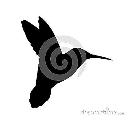 Vettore della siluetta del colibrì