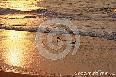 Vögel auf Strand am Sonnenaufgang