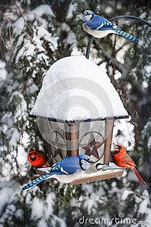 v gel auf vogelzufuhr im winter stockfotos bild 30611633. Black Bedroom Furniture Sets. Home Design Ideas