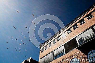 Vögel und Gebäudeoberseite
