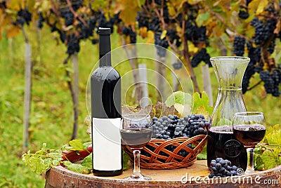 Viñedo con la botella de vino rojo