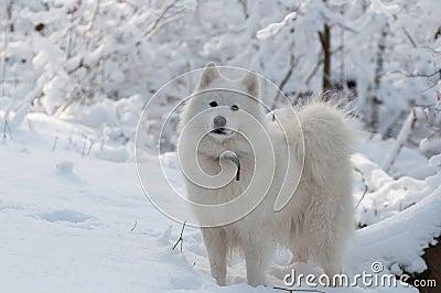 Viaje del bosque en invierno