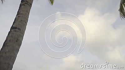Viaje exótico, árboles de palmas tropicales altos en orilla del océano con agua caliente almacen de metraje de vídeo