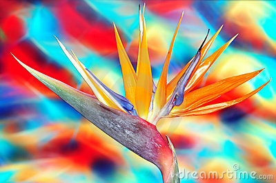 Vibrant Bird Of Paradise