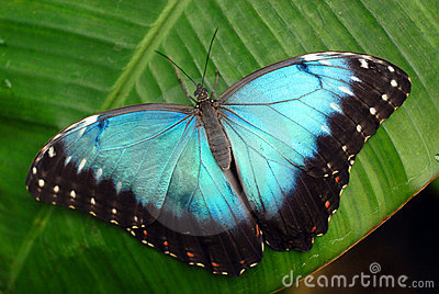 Vibrant blue butterfly