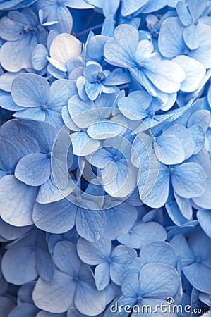 Vibrant blue flowers