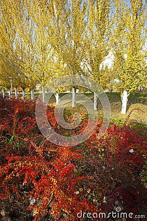 Vibrant Colors of Autumn