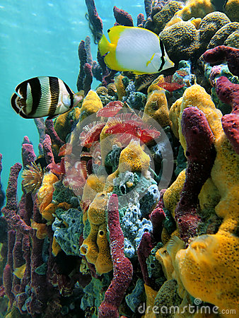 Vibrant colors of sealife
