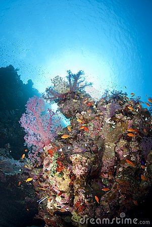 Vibrant and colourful tropical coral reef scene.