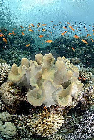 Vibrant and colourful tropical reef