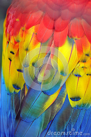 Vibrant colours of a macaw parrot