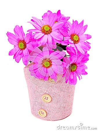 Vibrant daisies
