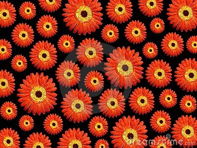 Vibrant daisy background