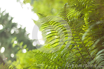 Vibrant Fern Canopy with Fronds