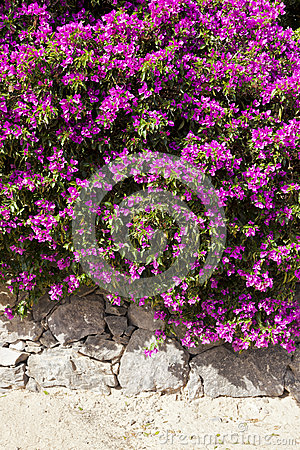 Vibrant flowers on stone wall