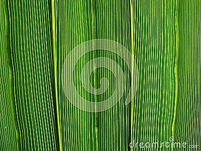 Vibrant green leaf lines.