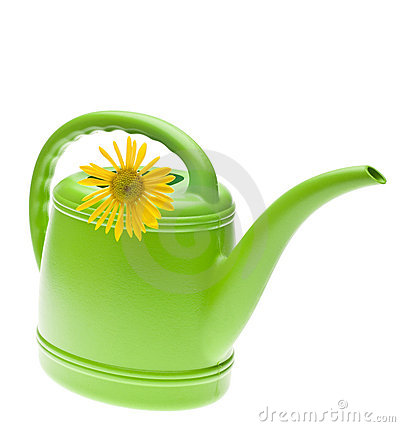 Vibrant Green Watering Can with Yellow Daisy