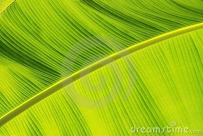 Vibrant Jungle Leaf