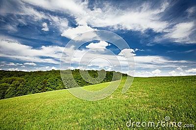 Vibrant landscape