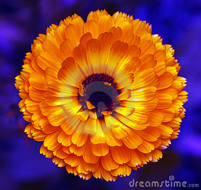 Vibrant Orange flower