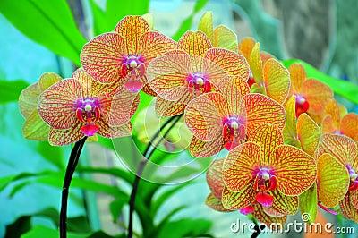 Vibrant Orchids