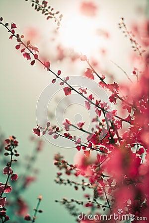 Vibrant red asian sakura background
