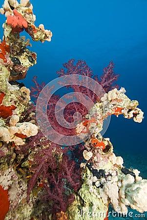 Vibrant soft coral