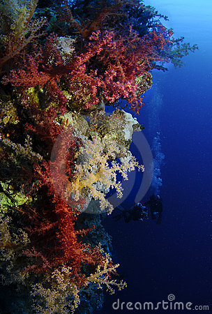 Vibrant soft coral with scuba divers in background