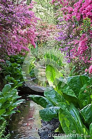 Free Vibrant Stream Royalty Free Stock Photos - 14280958