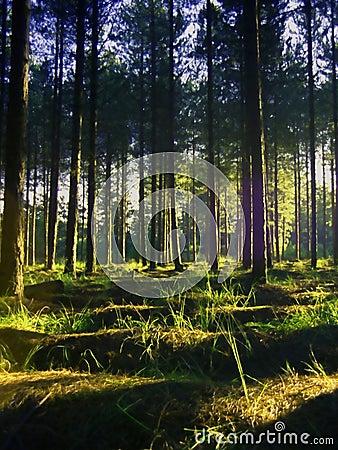 Vibrant Summer Pine forest