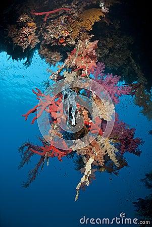 Vibrant tropical coral reef scene.