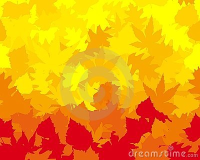 Vibrantly colored autumn leaves,  wallpaper
