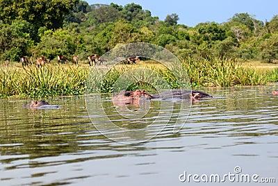 Victoria Nile coastline