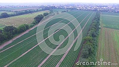 Vidéo aérienne des usines de concombre clips vidéos