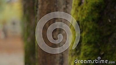 Vidéo en gros plan des arbres avec de la mousse se tenant en Central Park, écologie et nature clips vidéos