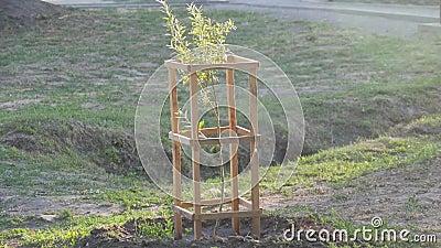 Vida nova Plantas crescentes Cresça árvores no parque filme