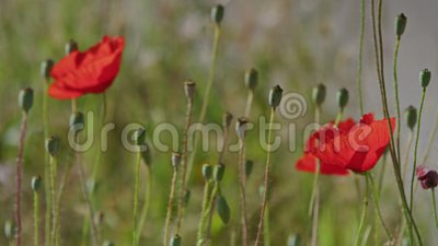 Beautiful flowers found in tall grass stock footage video of full beautiful flowers found in tall grass stock footage video of full flowers 113900968 mightylinksfo